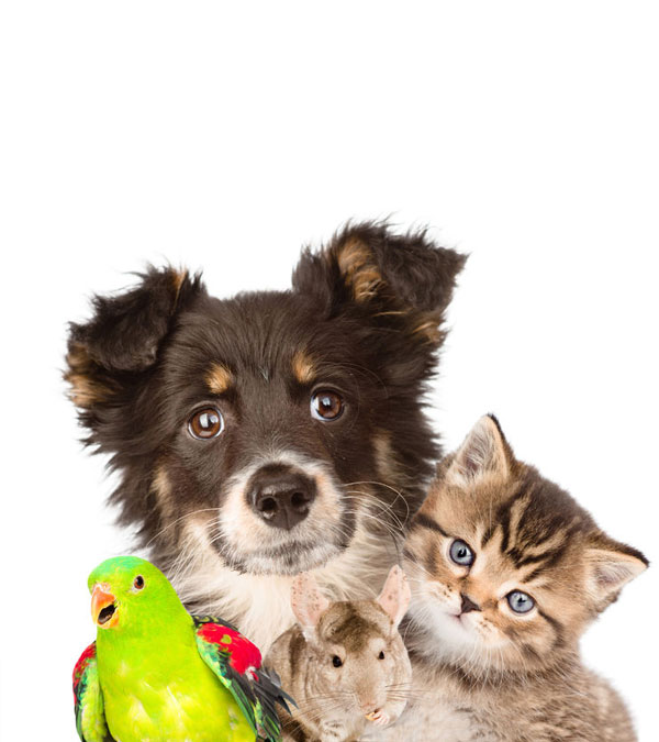 Pet friendly letting agency
