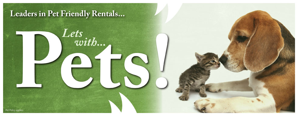 Pet Friendly Rentals 4