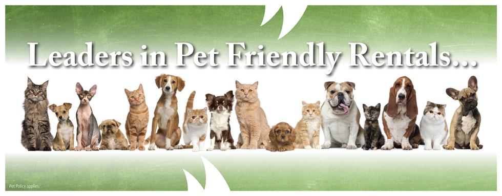 Pet Friendly Rentals 5