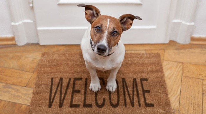pet friendly rentals a landlords perspective